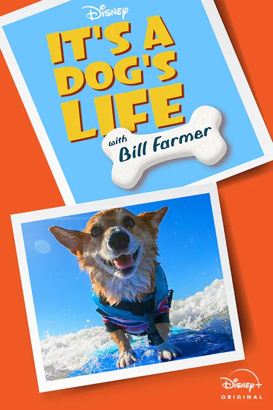 It's a Dog's Life - Season 1  Episode 9 - Avalanche Rescue Dogs & The Beagle Brigade