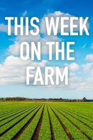 This Week on the Farm - Season 1 Episode 8